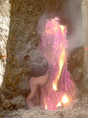 1071607605_2003_fall_fire_in_a_tree.jpg