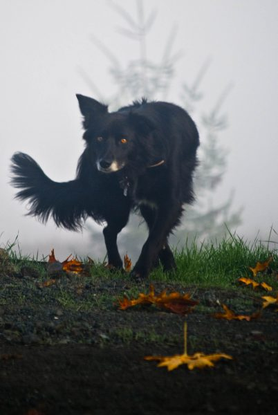 dog-in-fog