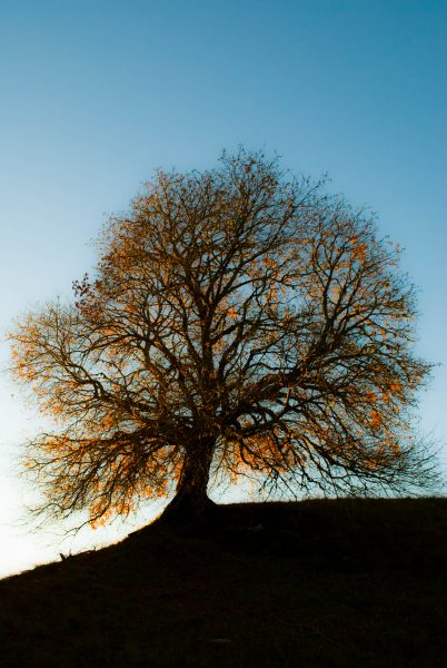 lighting-the-tree