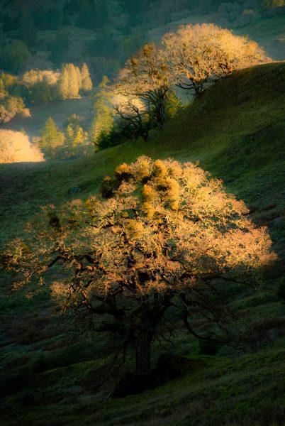 sunlight-on-trees