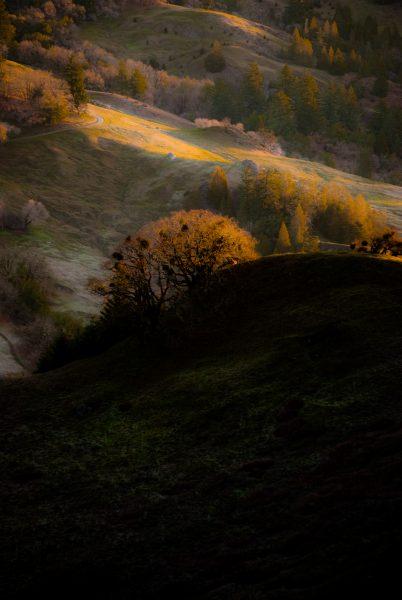 sunrise-on-frosty-meadows