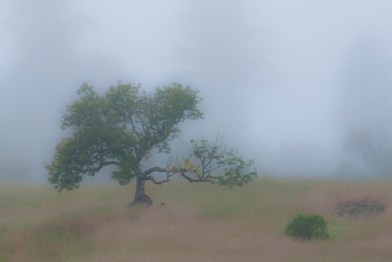 buckeye in fog