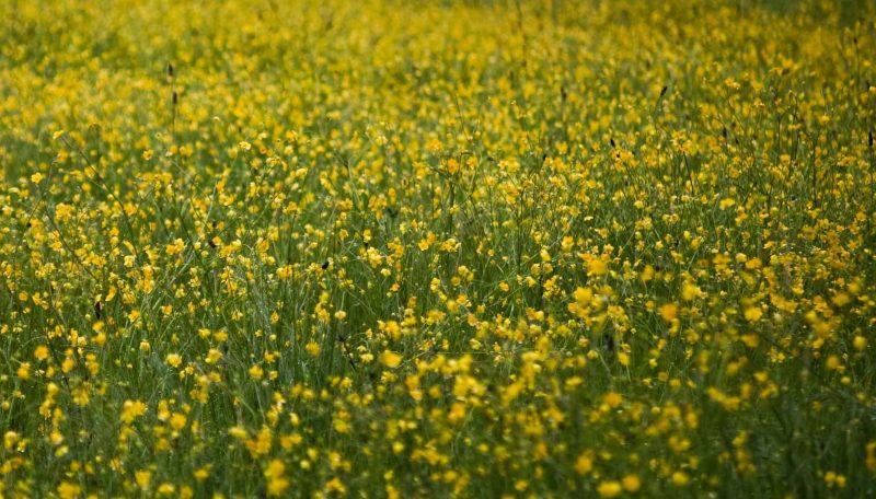 Field of flowers redheaded blackbelt up by fortuna grows a beautiful field of izmirmasajfo
